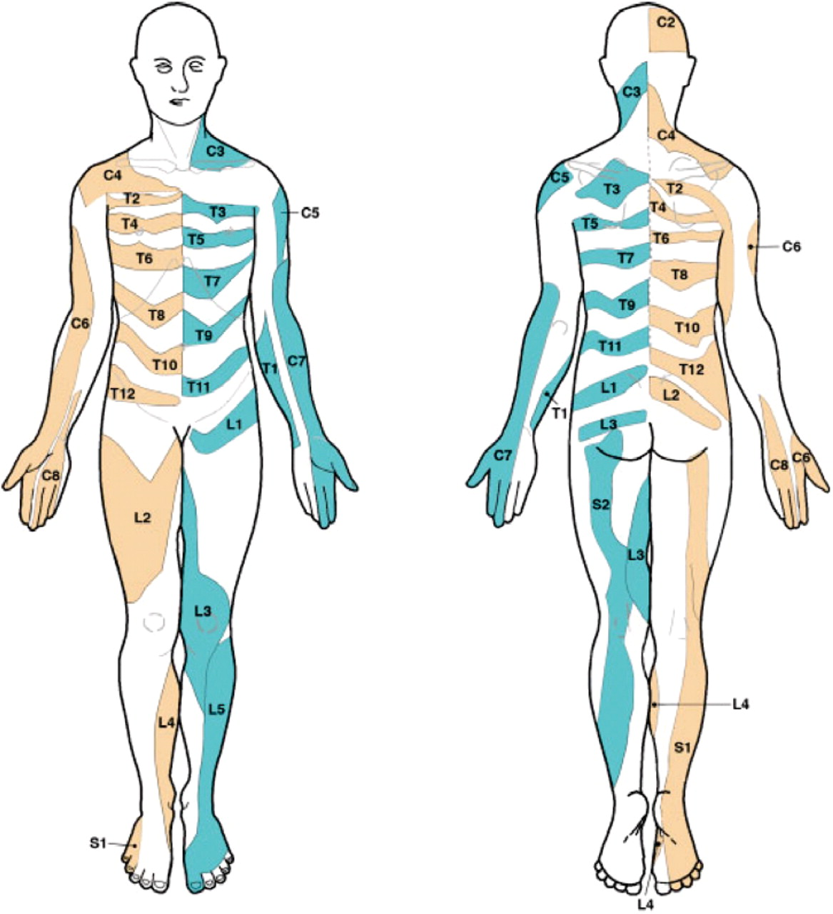 Dermatomes and dogma practical neurology download figure pooptronica