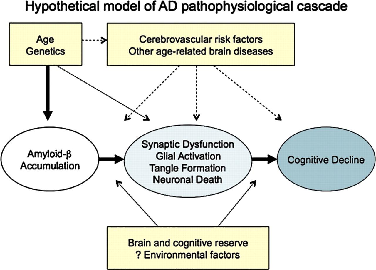 figure 2 hypothetical model of alzheimers disease