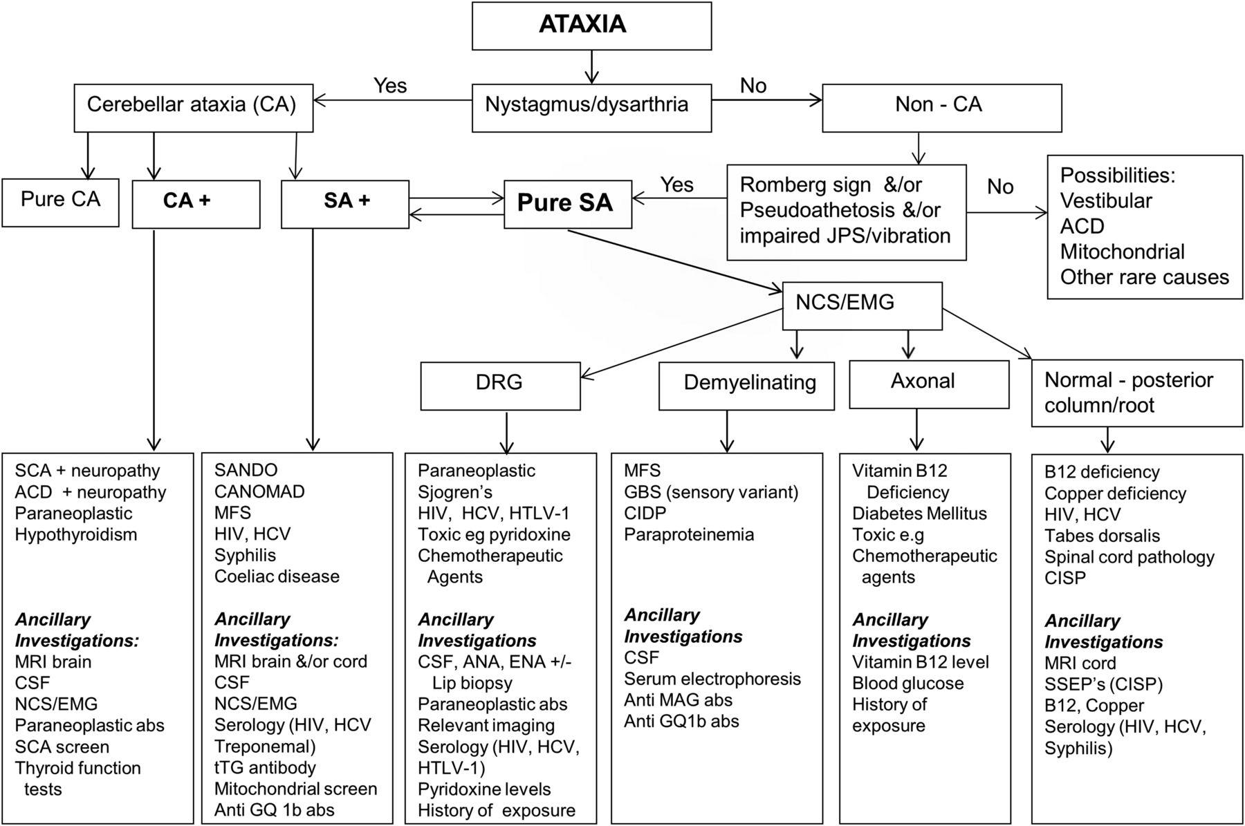 clinical assessment of the sensory ataxias  diagnostic
