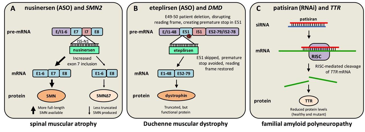antisense oligonucleotides and other genetic therapies